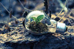 eco friendly light bulb plant
